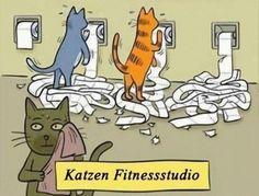 funpot: Katzen.jpg von Funny53