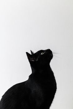 Black and White photo of a beautiful black cat Crazy Cat Lady, Crazy Cats, I Love Cats, Cute Cats, Adorable Kittens, Wallpaper Gatos, Smoke Wallpaper, Animal Wallpaper, Animals And Pets