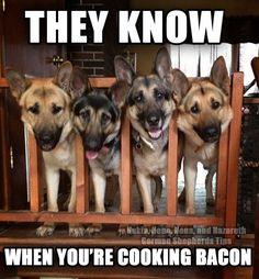 Doggy bacon strips. Mine eats them everyday :)