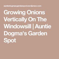 Growing Onions Vertically On The Windowsill   Auntie Dogma's Garden Spot