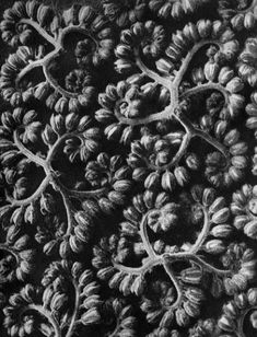 Loveliest of lovely things are they, On earth, that soonest pass away - but does it float        Karl Blossfeldt