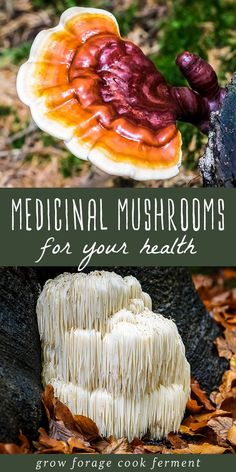 6 Medicinal Mushrooms for Your Health Learn more about six different medicinal mushrooms that have powerful health benefits. They will boost your immune system, mood, and give you energy! Calendula Benefits, Lemon Benefits, Matcha Benefits, Coconut Health Benefits, Valeur Nutritive, Tomato Nutrition, Nutrition Tips, Stop Eating, Natural Cures