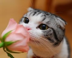 Take time to smell the roses.