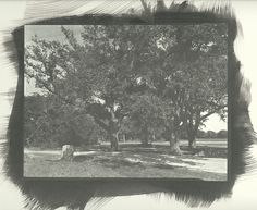 Mexican Artillery Position, San Jacinto Battlefield, Texas. A pure gold print -- notice the blue sky in the upper left corner. I exposed this negative from the spot where Sam Houston fell wounded as he led the charge on Santa Anna's camp.
