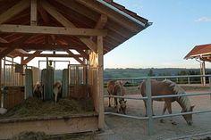 mammut heuraufen pferdehaltung pinterest pferde und netz. Black Bedroom Furniture Sets. Home Design Ideas