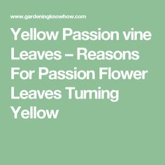 Yellow Passion vine Leaves – Reasons For Passion Flower Leaves Turning Yellow