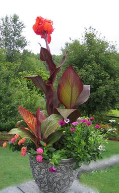 Tropicanna cannas in mixed container garden Tropicanna Black canna in back as thriller with brilliant red flower, accented with original Tropicanna canna in foreground as filler, with bright orange, pink and white annual flowers as the spiller Flower Garden Design, Tropical Garden Design, Annual Flowers, Container Flowers, Outdoor Plants, Potted Plants, Garden Spaces, Tropical Plants, Tropical Flowers