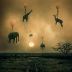 Migration: By Bethany Perron