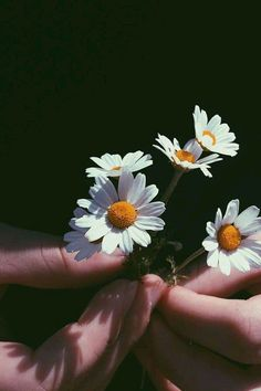 Close-Up Photography of Person Holding Chamomile Flowers Close-Up Photography of Person Holding Cham Daisy Wallpaper, Sunflower Wallpaper, Hand Photography, Close Up Photography, Light Photography, Aesthetic Pastel Wallpaper, Aesthetic Wallpapers, Flower Close Up, Beautiful Flowers Wallpapers