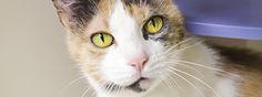 ASPCA's Pet of the Week: Snuggles, a playful, loving senior cat. Adopt Snuggles today!