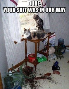 Proof That Cats Can Be Jerks