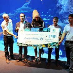 L'aquarium Mare Nostrum s'engage pour la sauvegarde des requins