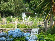 hortensias del jardin