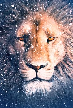 Aslan is known by another name in our world.
