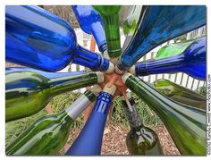About a year ago I saw this huge bottle flower in Durham, NC. Did not have the camera with me, but promised myself I'd return with a camera....