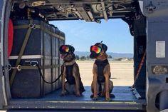 Τα δυο σκυλιά που μόλις ολοκλήρωσαν την εκπαίδευσή τους με ελικόπτερο - http://www.mimoupeis.gr/%cf%84%ce%b1-%ce%b4%cf%85%ce%bf-%cf%83%ce%ba%cf%85%ce%bb%ce%b9%ce%ac-%cf%80%ce%bf%cf%85-%ce%bc%cf%8c%ce%bb%ce%b9%cf%82-%ce%bf%ce%bb%ce%bf%ce%ba%ce%bb%ce%ae%cf%81%cf%89%cf%83%ce%b1%ce%bd-%cf%84%ce%b7/