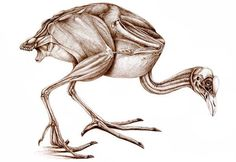 Dragon Anatomy, Muscle Anatomy, Drawing