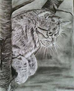 Wonderful detailed pencil drawing