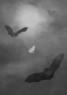 Bats and moth by DEVILandTHEDEEPSEA on Etsy, Just bought. It's now mine, just need to find a frame