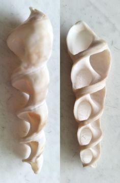 Sea Shells Conch Conchas Iridescent Plastic Wedding Baby Bridal Shower Vase Fill