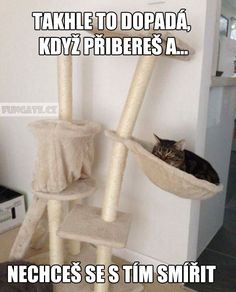 Funny Memes, Jokes, Chuck Norris, Crazy Cats, Haha, Funny Pictures, Nerf, Random Things, Pranks
