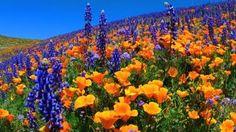 Field of beauty!