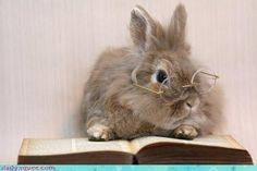 IT'S THE HARRY POTTER BUNNY! THE BUNNY WHO LIVED! :D