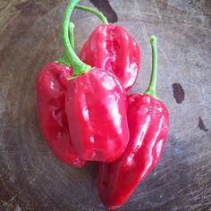 Hot stuff! Chillies from one of my plants. #chilli #chillies #peppers #red #food #gardening #plants
