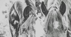 Horse. Peaceful. Beautiful animals 🐴❤