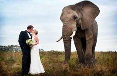 Wedding venues in knysna Plan My Wedding, Dream Wedding, Wedding Ideas, Waiting For Marriage, Herd Of Elephants, Game Lodge, Elephant Figurines, Affordable Wedding Venues