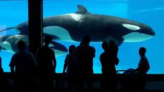 #Marineland charged with five counts of animal cruelty - CTV News: CTV News Marineland charged with five counts of animal cruelty CTV News…