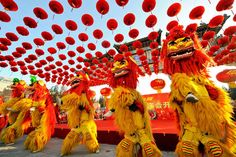 Lion Dance for the Tet #Holiday