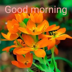 Morning Greetings Quotes, Good Morning Quotes, Morning Pictures, Morning Images, G Morning, Star Of Bethlehem, Good Morning Flowers, Orange Flowers, Pretty Flowers