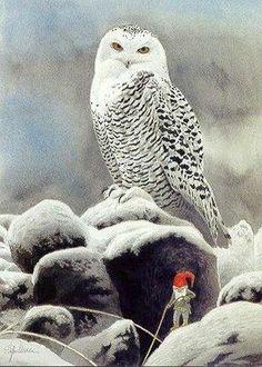 Staffan Ullstrom. trots als een pauw zit hij daar ,de sneeuwuil