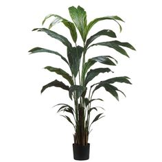 6' Palm Tree x21 in Plastic Pot Green (Pack of 2) >>> Read more  at the image link.