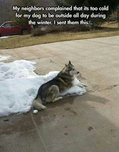 my neighbors complained about me leaving my dog out in the cold