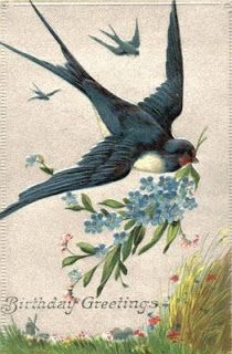 Birthday Greetings with swallow