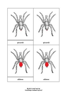 The file includes:7 spider parts: spinnerets, abdomen, chelicerae, pedipalp, cephalothorax, eyes, legs.1 title card, 7 pictures with labels, 7 pictures without, and 7 labels.