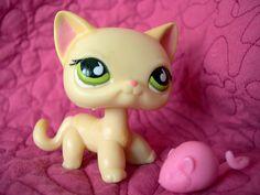 Little Pet shop, Cute Cat