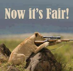 This is not anti-hunting. If people are hunting for food and not just for sport that's one thing. What makes me sick is people going on canned hunts and shooting animals that don't have a chance. Animals And Pets, Funny Animals, Cute Animals, Wild Animals, Beautiful Creatures, Animals Beautiful, All Meme, Stop Animal Cruelty, Animal Quotes