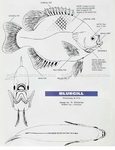 #1390 Bluegill Carving - Wood Carving Patterns - Wood Carving
