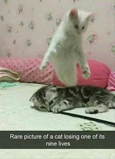 24 Funny Animal Pictures Of The Day - Funny Pictures - Funny Animal Jokes, Funny Cat Memes, Cute Funny Animals, Cute Baby Animals, Funny Cute, Cute Cats, Animal Memes Clean, Funny Cartoons, Top Funny