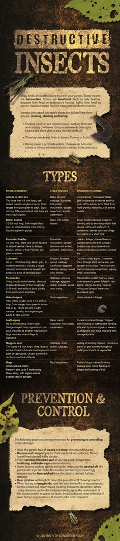 Destructive Insects Infographic - great resource for dealing with and preventing problems in the garden. #bugs #gardening