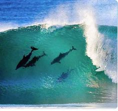 Surfing with Dolphins in Byron Bay