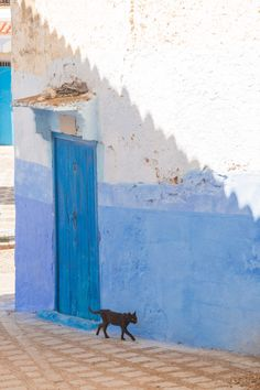 Chefchaoeun: Why is There a Blue City in Morocco?