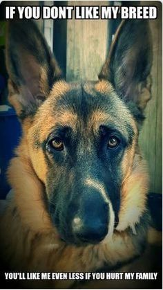 Wicked Training Your German Shepherd Dog Ideas. Mind Blowing Training Your German Shepherd Dog Ideas. Animals And Pets, Funny Animals, Cute Animals, Beautiful Dogs, Animals Beautiful, I Love Dogs, Cute Dogs, Big Dogs, White Shepherd