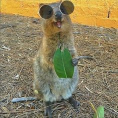 Quokka Life is pretty chill