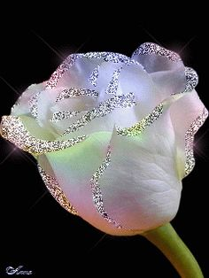 🌷A Glittery White Rose🌷 Roses Gif, Flowers Gif, Rare Flowers, Beautiful Rose Flowers, Beautiful Gif, Love Rose, Glitter Gif, Glitter Roses, Mini Plus