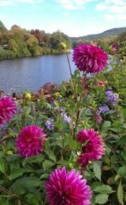 From the Bridge of Flowers in beautiful Shelburne Falls, MA. The Quilts of Ann Brauer: toward a better image of the dahlias