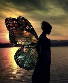 A sunset viewed through the lens of delicate wings---beautiful!